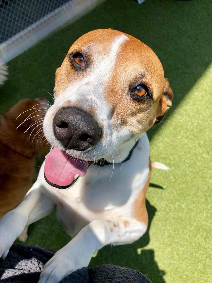 About | Our Dog House Camarillo Dog Boarding