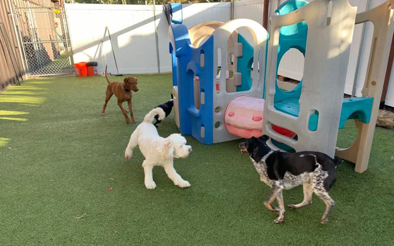 Our Dog House Camarillo Daycare